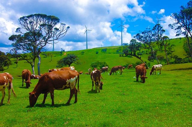 pastva pro krávy