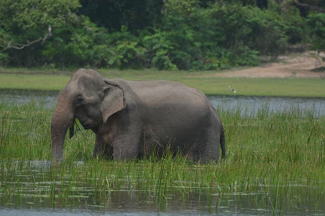 slon ve vodě